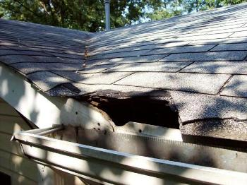 Hole in Roof Caused by Animals Call Today for Inspection